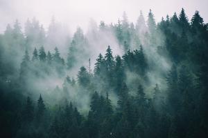 Bidra till en mer hållbar skogsindustri genom att köpa ytterpanel och andra utvändiga snickerier av oss